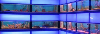 Qss aquarium koi centre for Koi pool opening times